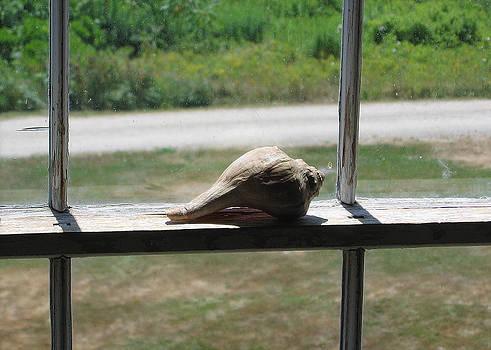 Seashell Portrait by J R Baldini M Photog Cr