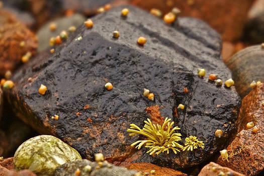 Seashells by the Seashore by Colette Panaioti