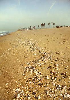 Seashells Washed Ashore by Susan Gary