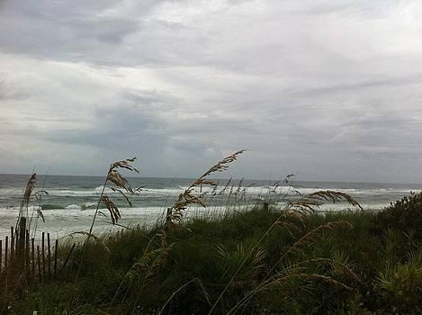 Seaside Oats by Rebecca Hale
