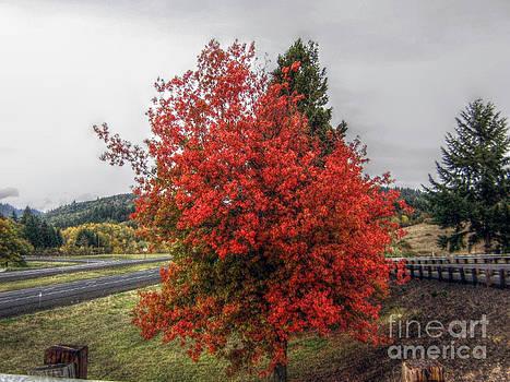 Seasonal Beauty by Michael Justice