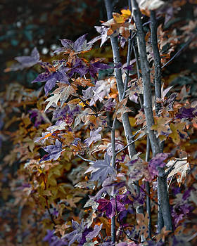 Seasonal changes by Michael Putnam