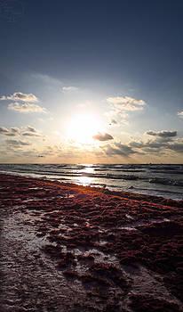 Seaweed Sunrise - Texas Landscape by Tejas Prints