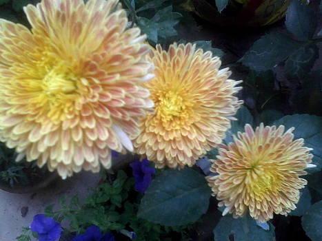 Sebati Flower by Amisha Tripathy
