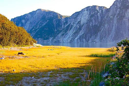 Secrets of Glacier Bay by Judy Barrera