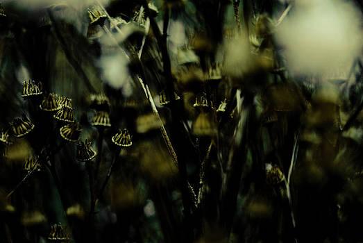 Seed Heads by Grebo Gray