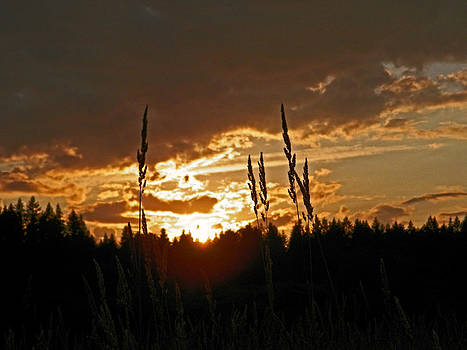 Seeds In Silhouette by Seth Shotwell