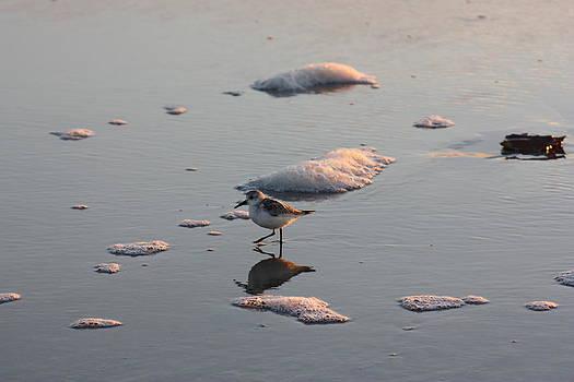 Seeking Breakfast On The Waters Edge by Kim Galluzzo Wozniak