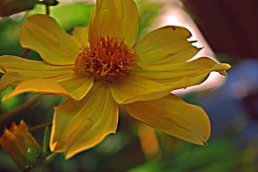 Michelle Cruz - Sensational Yellow