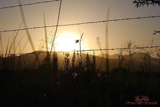 Sepia Sunrise by Sheryl Cox