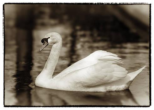 Hakon Soreide - Sepia Swan