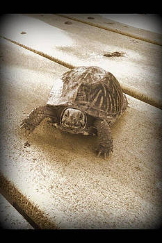 Sepia Turtle by Emma Sechrest