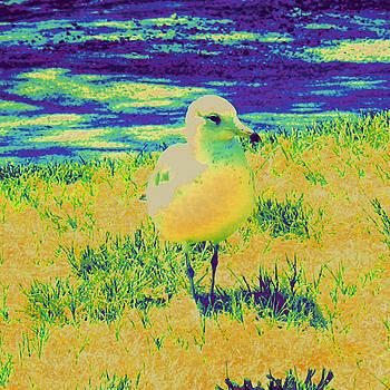 Serene Sea Gull by Tracy Daniels