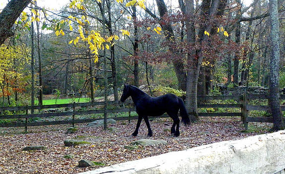 Serene Setting with a Friesian by Kim Galluzzo Wozniak