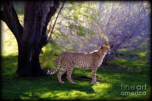 Serengeti Prince by Van Schipper