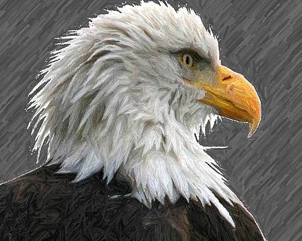 Carrie OBrien Sibley - Serious Eagle