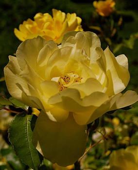 Sexy Rose by Michelle Cruz