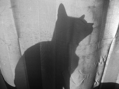 Shadow Cat by LDPhotography Stephanie Armstrong