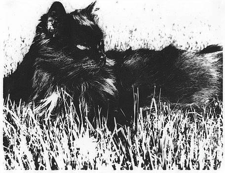 Shadow Cat Portrait by AE Hansen