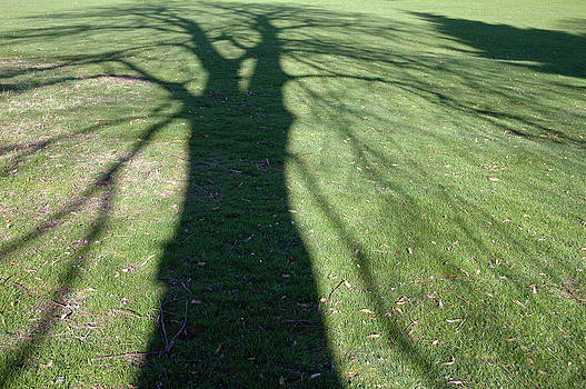 Shadow of a tree on green grass by Matthias Hauser