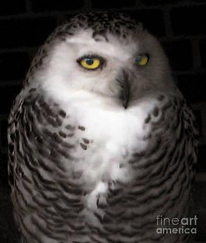 Anne Ferguson - Shadow Owl