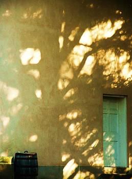 Shadow Tree at Hampton Mansion by Nancy Mitchell