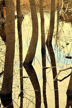 Marty Koch - Shadow Trees