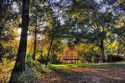 Shadowed park by Alex Owen