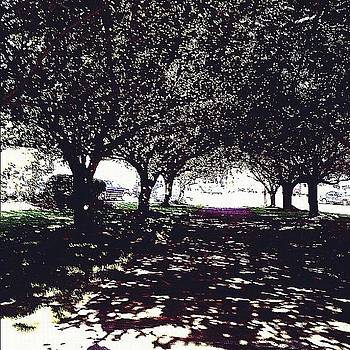 Shadows All Around :) #trees #shadow by Caitlin Salvitti