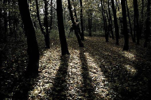 Shadows of trees  by Presiyan Petrov