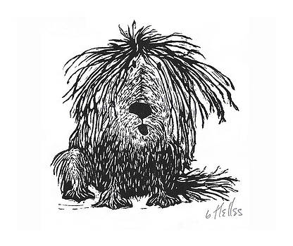 Shaggy Dog in Black by Barry Nelles Art