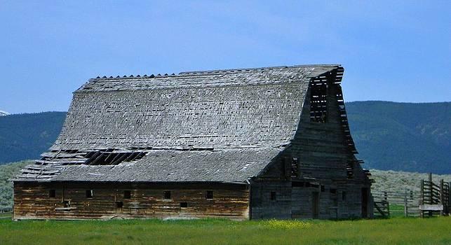 Shaky Barn by Wanda Jesfield