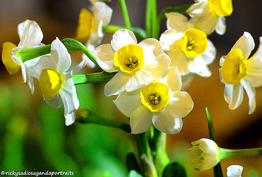 Shangri-La Daffodils by Enrique Rueda