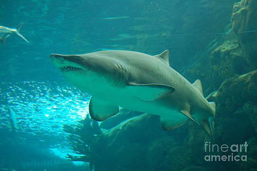 Shark by Bill Dinkins