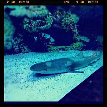 #shark #sharktank by Cortney Herron