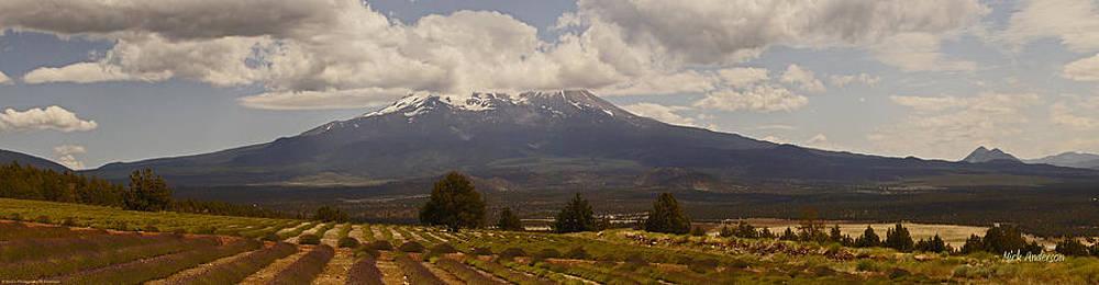 Mick Anderson - Shasta Lavender Farm and Mt Shasta
