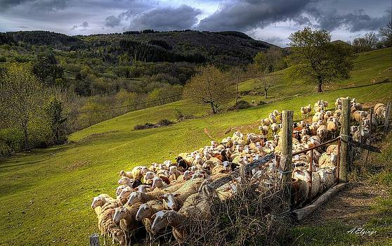 Sheep by Alexander Elzinga