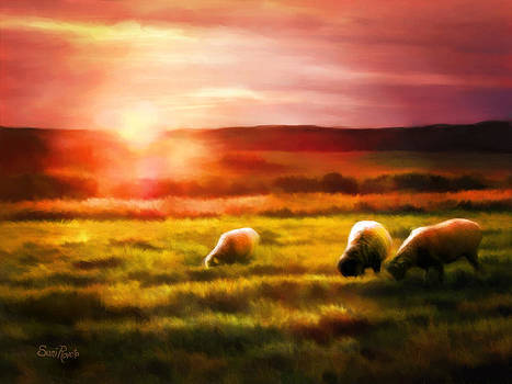 Sheep In Sunset by Suni Roveto