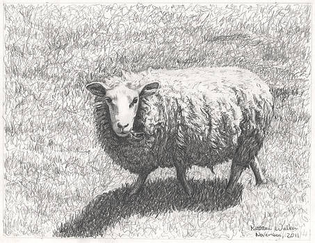 Sheep by Kathleen Walker