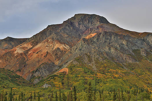 Sheep Mountain Fall Colors Alaska by Sam Amato