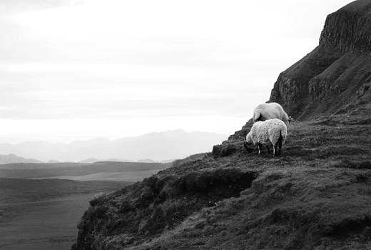 Sheep on The Edge by Kelsey Horne