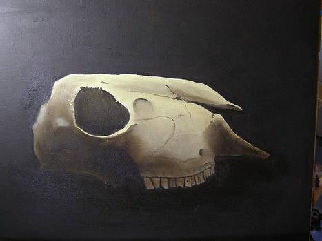 Sheep skull by Eric Burgess-Ray