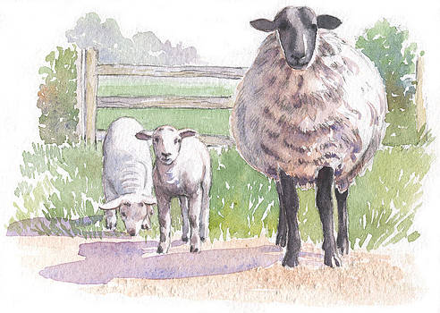 Sheep with lambs by Maureen Carter