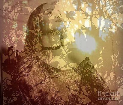 Sheik Sunset by Trish Hale