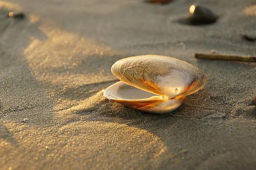 Shell on the Beach by Corrie McDermott
