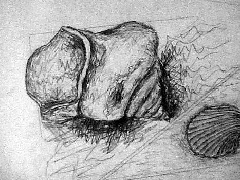 Forartsake Studio - Shell Study I - Drawing