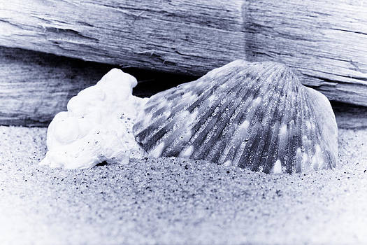 David Hahn - Shells