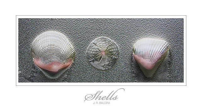 Shells by J R Baldini