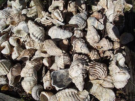 Shells by Rani De Leeuw