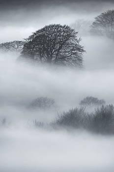 Sherriff Wood by Andy Astbury